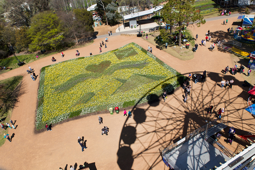 Floriade and the Ferris Wheel