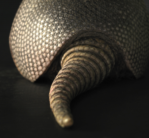 Armadillo Derri�re
