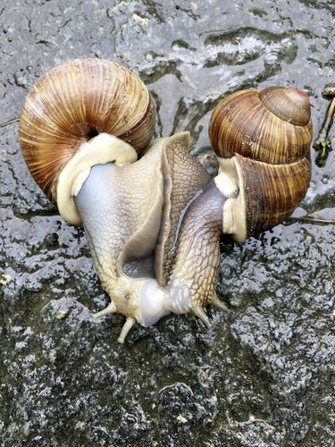 Snails In Love