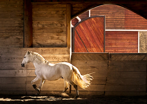 Lusitano Light