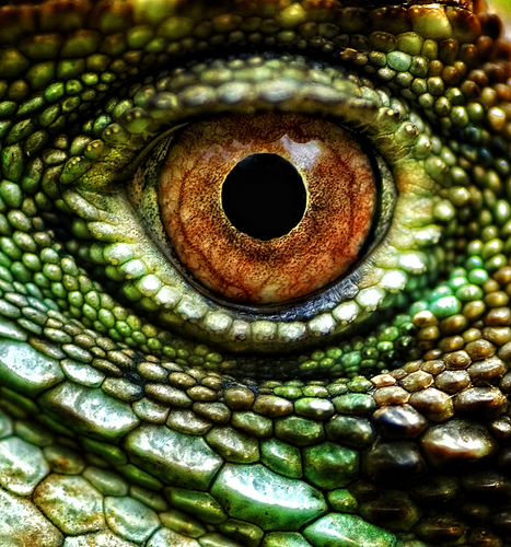 Lizards Eye