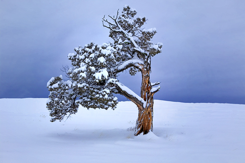 Lone Winter Tree