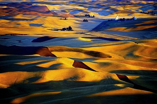 The Golden Fields