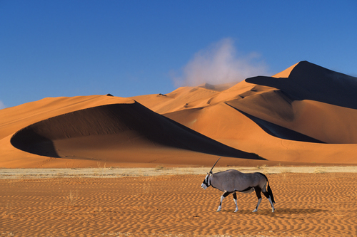 In the Namib Desert No2