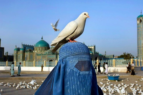 Afghan Woman with bird