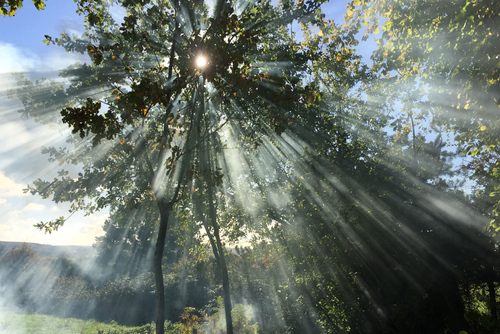 Beaming Tree