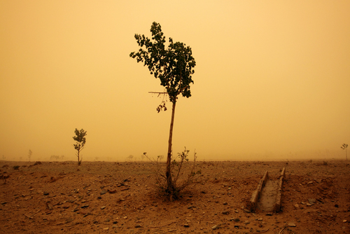 Yellow Skies - Desertification in China