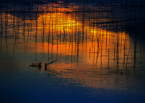 Net-fishing at Sunrise