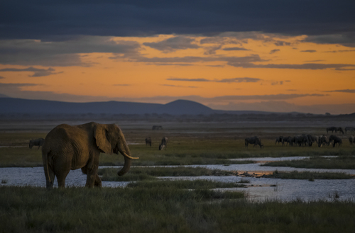 Elephants at sundown