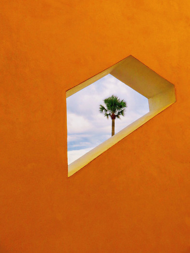 Peeking Palm