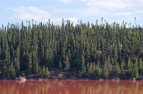 Polluted Lake, Near Labrador City
