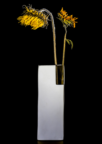 Two Dry Sunflowers In White Vase