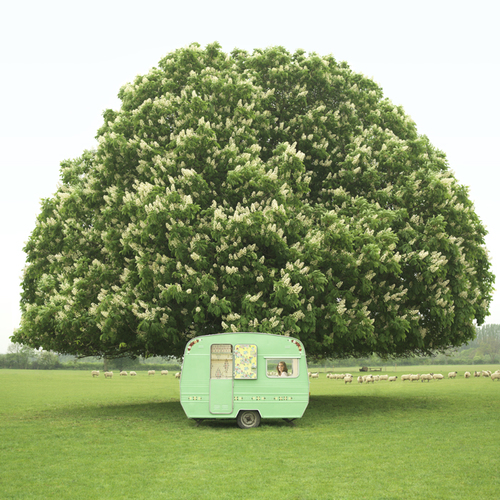 Green Caravan Under Horse Chestnut Tree