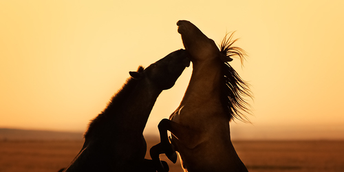 Horses, Good Morning