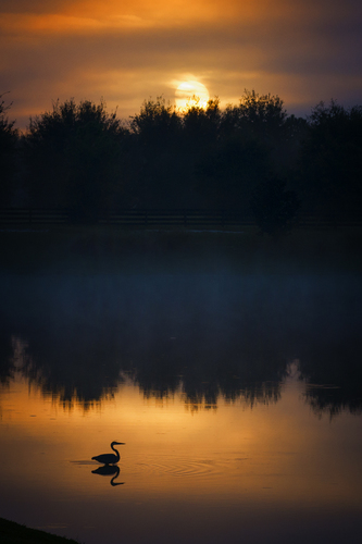 Heron Sunrise #1
