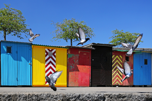 Colorful Huts At The Harbor