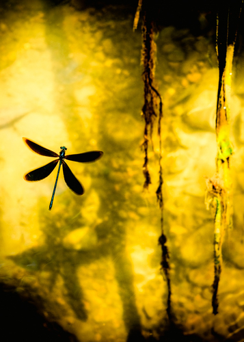 The Last Day of a Dragonfly