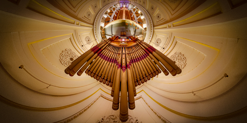 Pipe Organ Bird